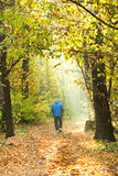 Sunlight lit path in autumn forest Royalty Free Stock Image