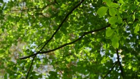 Sunlight makes its way through the leaves of the trees. Solar glare in a dense forest. Sunlight makes its way through the leaves of the trees. Solar glare in a stock footage