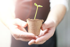Sunlight on man hand holding sprout in palms Royalty Free Stock Photo