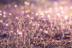Sunlight on meadow flowers Royalty Free Stock Image