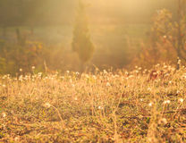 Sunlight on meadow flowers Royalty Free Stock Photo