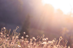 Sunlight on meadow flowers in the morning Royalty Free Stock Photos