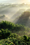 Sunlight with mist Royalty Free Stock Images