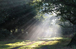 Sunlight Mist Forest Glade. Shafts of morning sunlight lighting a forest path __ focus on center Royalty Free Stock Photography