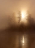 Sunlight mist trees royalty free stock images