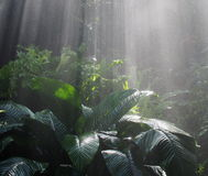 Sunlight And Mist On Tropical Plants Stock Images
