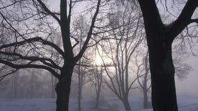 Sunlight in mist and winter park tree. Sunlight in the mist and winter park tree stock video footage