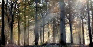 Sunlight in a misty undergrowth Royalty Free Stock Photography
