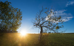 Sunlight in the morning. Old tree Royalty Free Stock Photography