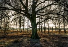 Sunlight in the morning in westmünsterland stock images