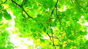 Sunlight through oak  tree leaves in summer day, rotation, sound. Version 1 stock video