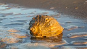 Free Sunlight On Conch Shell Tidal Pool Outer Banks NC Stock Images - 138322974