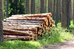Free Sunlight On Stack Of Pine Logs In Summer Forest Stock Photos - 20101673
