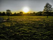 Sunlight Over A Green Field Of Dandelions. Sunset shining over a field of green with many dandelion flowers near a park bench Royalty Free Stock Photos