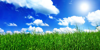 Sunlight over meadow Royalty Free Stock Photo