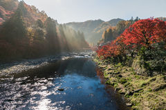 Sunlight over river with Colorful Autumn leaf Stock Image