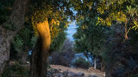 Sunlight over the trees near the natural pool of giola greece, with brightly colored stones royalty free stock photo