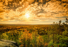 Sunlight Over the Treetops in an Autumn Forest - Golden Royalty Free Stock Image