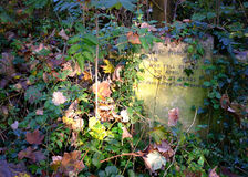 Sunlight on overgrown grave. In cemetary, autumn Stock Images