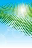 Sunlight and palm leaf. Blurry summer view with sunlight and palm leaf Stock Photos