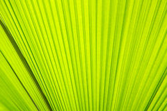 Sunlight on palm leaf. Textures Royalty Free Stock Image