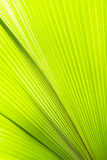 Sunlight on palm leaf. Textures Royalty Free Stock Images