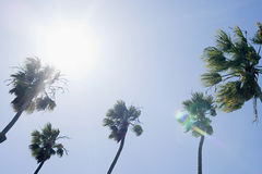 Sunlight and palm trees Stock Photos