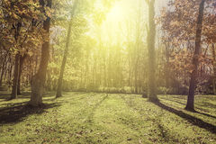 Sunlight in the park - autumn Royalty Free Stock Image
