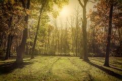 Sunlight in the park - autumn season Stock Photos