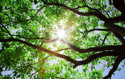 Sunlight pass through the trees. Sunlight passes through the tree in the summer morning stock photo