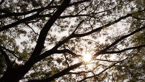 Sunlight pass through trunk. Take by slider equipment stock video