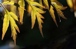 Sunlight passing through leaves with a dark background Royalty Free Stock Photos