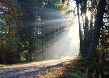 Sunlight passing through trees. Autumn photo, enlightenment Stock Images