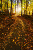 Sunlight Path in a Fall Forest Royalty Free Stock Photos