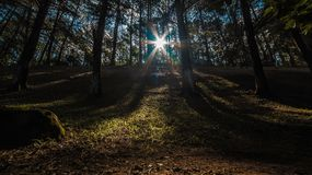 Sunlight Piercing Through the Trees during Daytime Royalty Free Stock Images