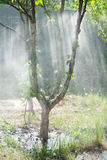 Sunlight through the rain in the garden Royalty Free Stock Photos