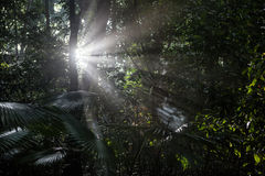 Sunlight and Rainforest Stock Image