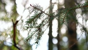 Rays sunlight forest branch. Sunlight rays in the forest wood spring stock video footage