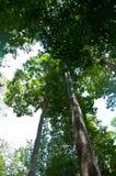 Sunlight rays are going through tree Stock Photo