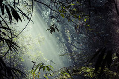Sunlight rays pour through leaves in a rainforest at Sinharaja F Stock Photos
