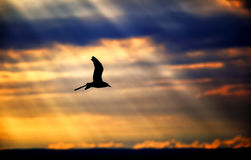 Sunlight rays with seagull Stock Images