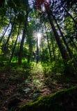 Sunlight rays through the trees Stock Photos