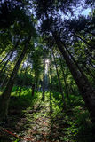 Sunlight rays through the trees Stock Image