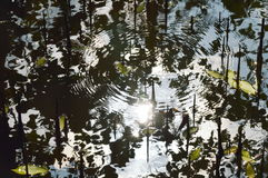 Sunlight reflection and ripple on water in mangrove forest Royalty Free Stock Image