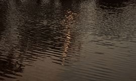 Sunlight reflection in water of a lake. Blurry beautiful sunlight reflection fallen in water of a lake in the afternoon unique royalty free natural photo royalty free stock photography