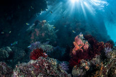 Sunlight and Rocky Pacific Reef Royalty Free Stock Photography