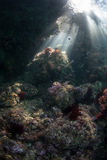 Sunlight and Rocky Reef Stock Photos