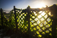 Sunlight through the seaweed's farming net in Bali, Indonesia. This was shot at a local seaweeds farm near a beach in Bali Island, Indonesia Royalty Free Stock Photo