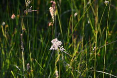 Sunlight on sedge Stock Images