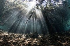 Sunlight and Shadows in Mangrove Forest Royalty Free Stock Images